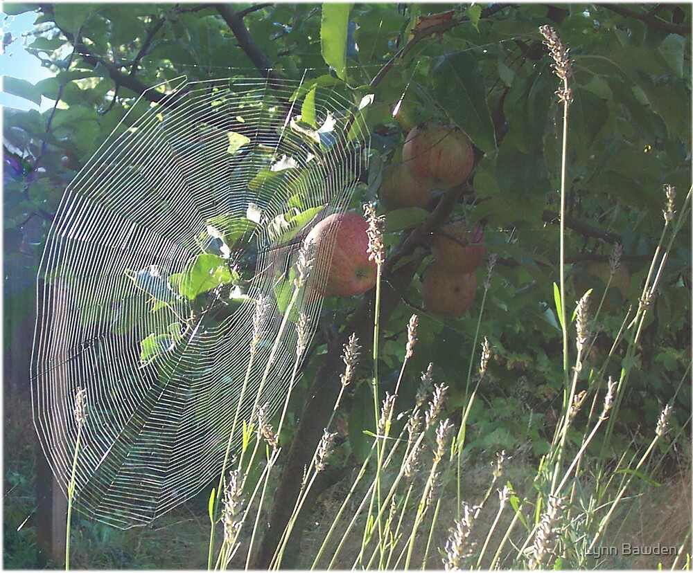 """""""What a Web I Weave"""", said the Spider by Lynn Bawden"""