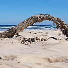 Living Driftwood, Stockton Beach, NSW by Jennifer Mosher