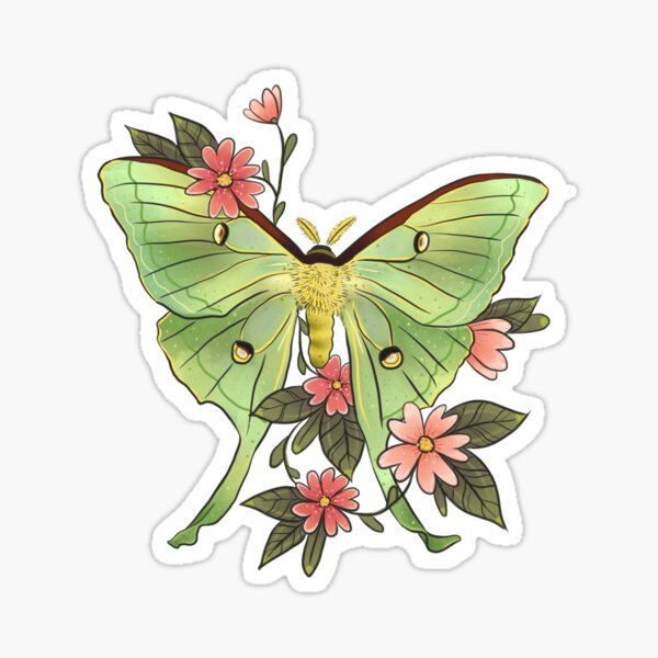 Actias Luna moth soft green Sticker