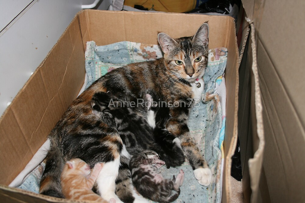Laura & Kittens 2 days Old.... by AnneRobinson73