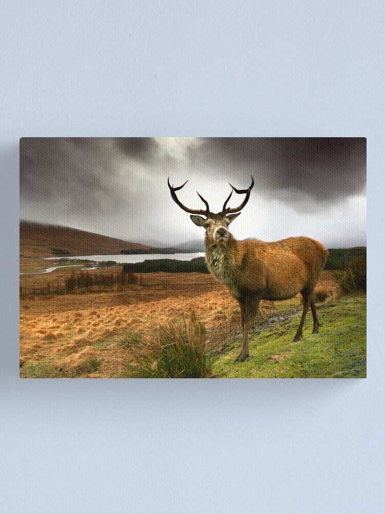 Alternate view of Monarch of the Glen Canvas Print