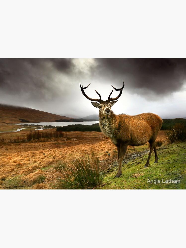 Monarch of the Glen by AngelaBarnett