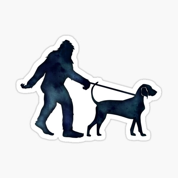 Bigfoot Walking His Bluetick Coonhound Sticker