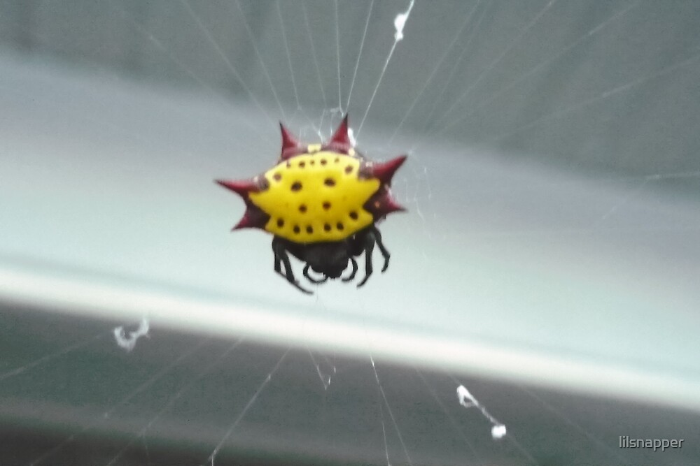 """""""Ooooh It's a Spider"""" by lilsnapper"""