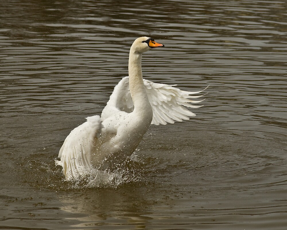 Swanesque by greyrose