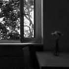 The Kitchen Window ... Berlin by Angelika  Vogel