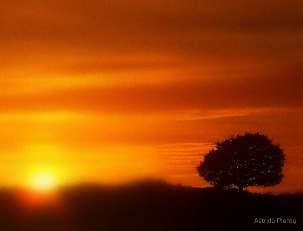 Playing with Fire by Astrida Plenty