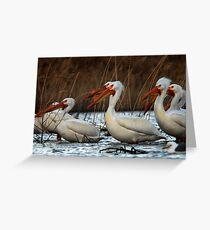 Pelicans - Saratoga Springs, Utah Greeting Card