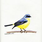 Eastern Yellow Robin by FayeDoherty