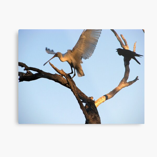 Hey you get out of my tree! Metal Print