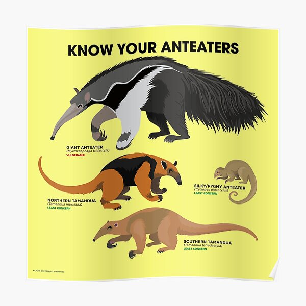 Know Your Anteaters Poster