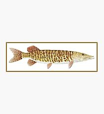 muskellunge Photographic Print
