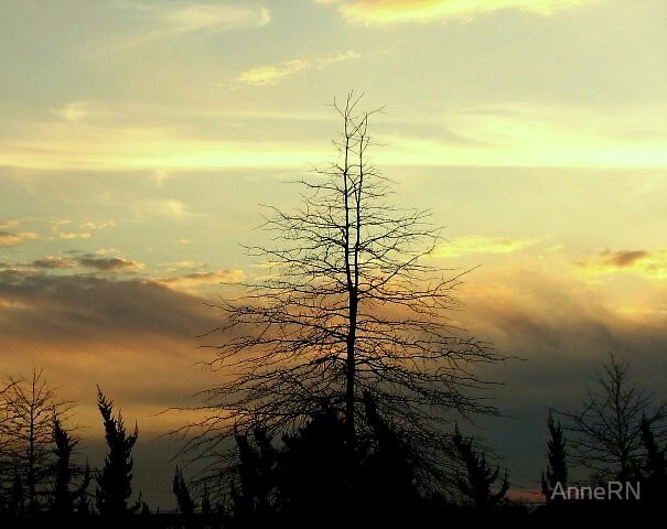 Spring Sunset by AnneRN