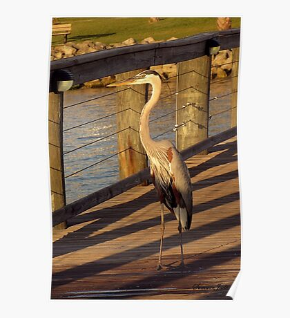 Big Bird Walks on an Indian River Pier Poster