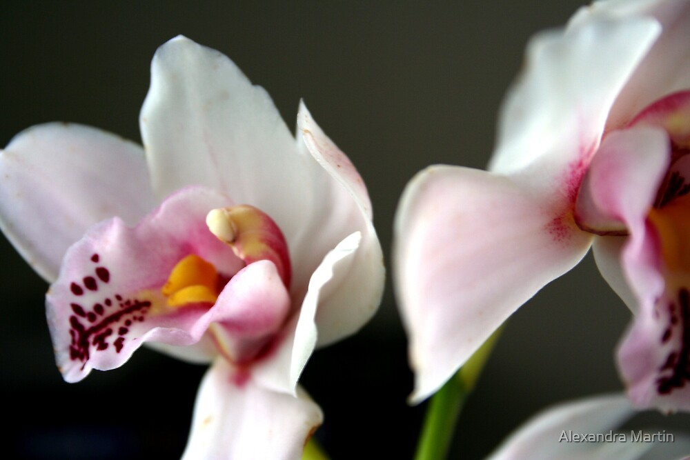 Orchids by Alexandra Martin