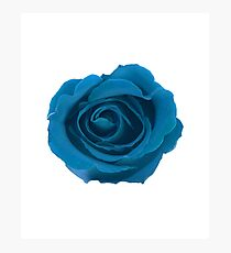 In Full Bloom - Big Blue Rose Floral Design Photographic Print
