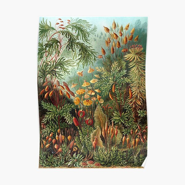 Vintage Plants Decorative Nature Painting Illustration Artwork Poster