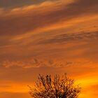 Summer Sunrise by Sue  Cullumber