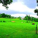 Lake District II by Tom Gomez