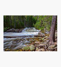 Romantic Forest Stream Photographic Print