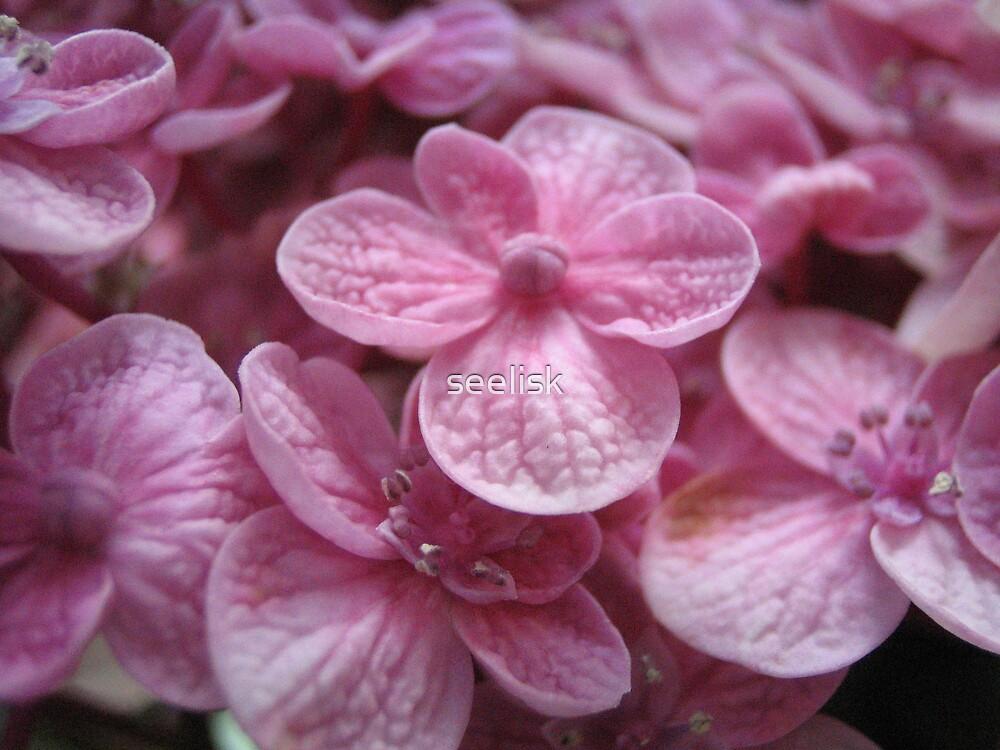 Pink Blossoms by seelisk