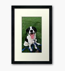 Rat Terrier mix Framed Print