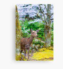 Miyajima Island Deer Canvas Print