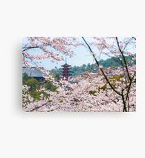 Miyajima Island Cherry Blossoms Canvas Print