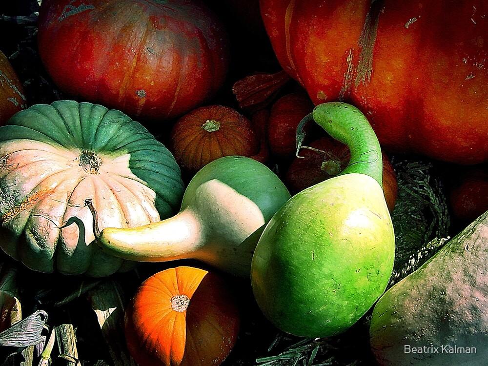 Squash Harvest by BMV1