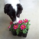 Mmmm...these smell good! by Glenna Walker