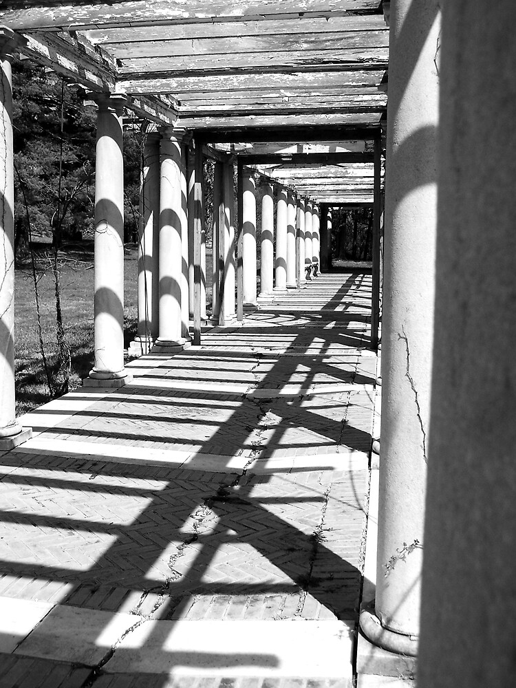 Shadows by Tara Johnson