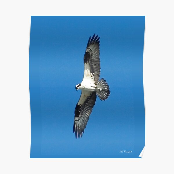 Soaring Above Poster