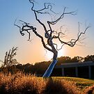 Barren Light - Crystal Bridges Museum of American Art by Gregory Ballos