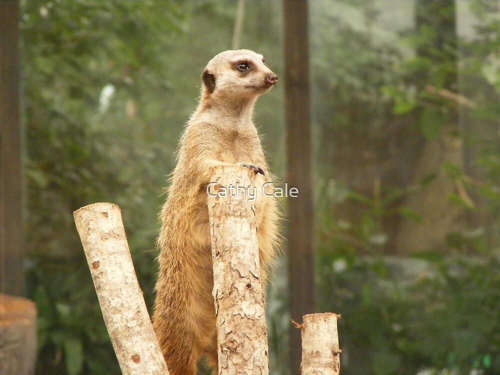 Meerkat by Cathy Cale