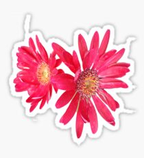 Hot Pink Flowers Sticker
