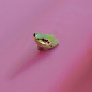 FROG by Jayson Gaskell
