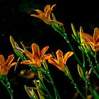 Asiatic Lilies by Alla Gill