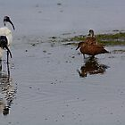 Foraging feathered foursome by Peter Krause