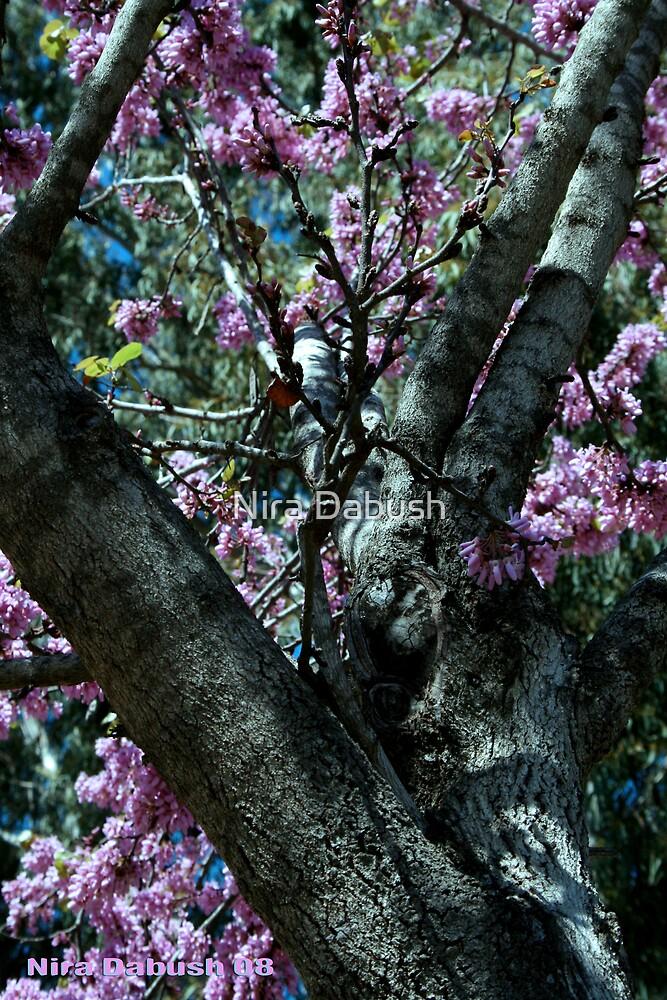 The Atmosphere Surrounds a Tree by Nira Dabush