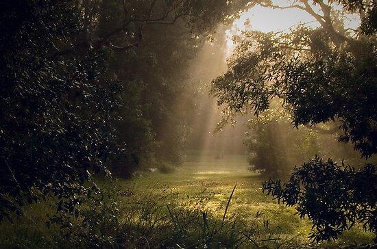 Misty morning by Rosalie Dale