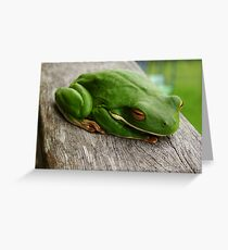 White lipped green tree frog Greeting Card