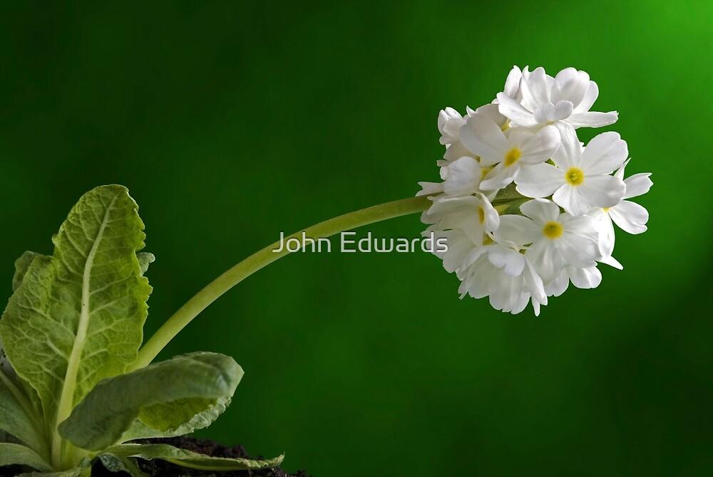 Alba by John Edwards