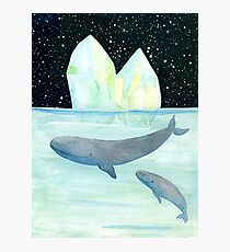 Cool whales on Antarctica Photographic Print