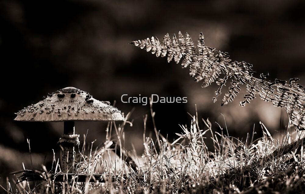 Fungi-Fern by Craig Dawes