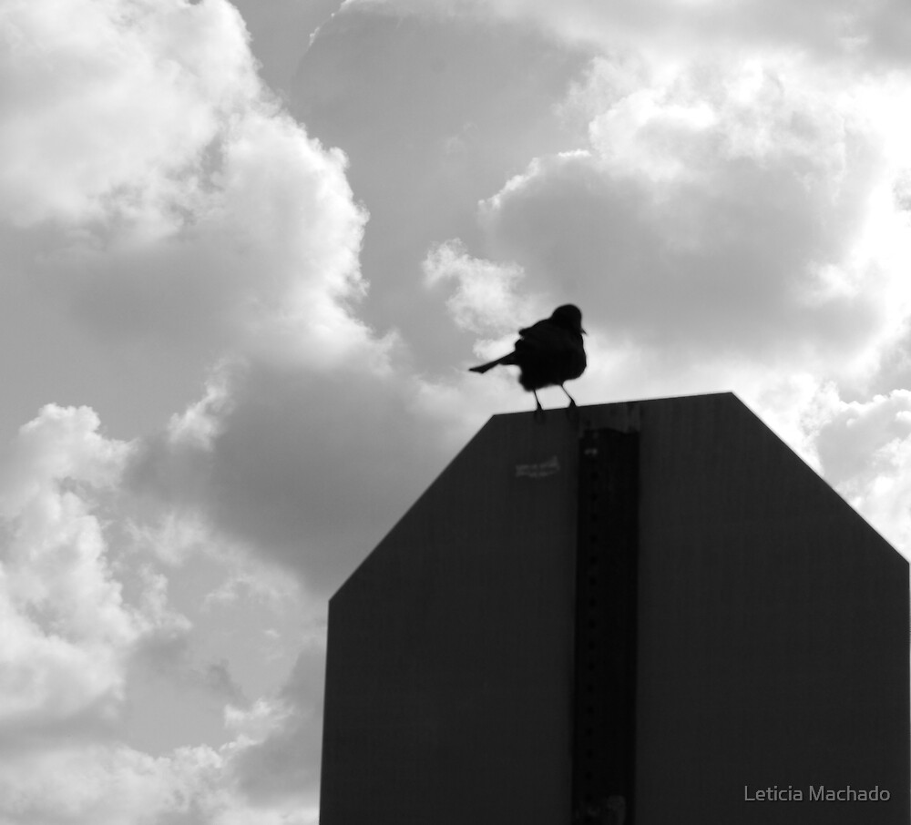 A Loner by Leticia Machado
