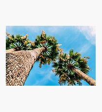 Green Palm Trees On Blue Sky Photographic Print