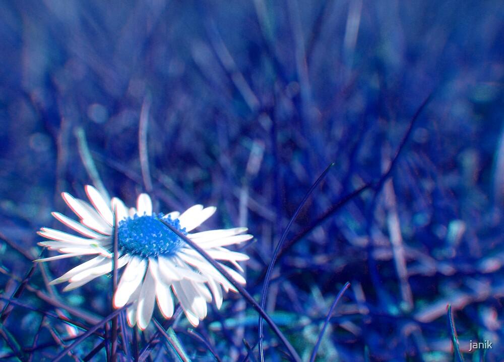blue daisy by janik