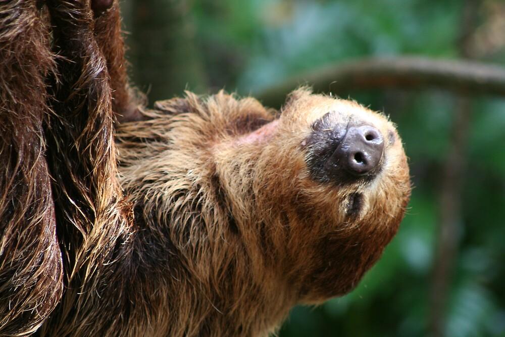Nice 'n easy does it Mr Sloth!! by AndyV