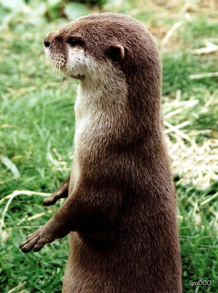 Otter by ljm000