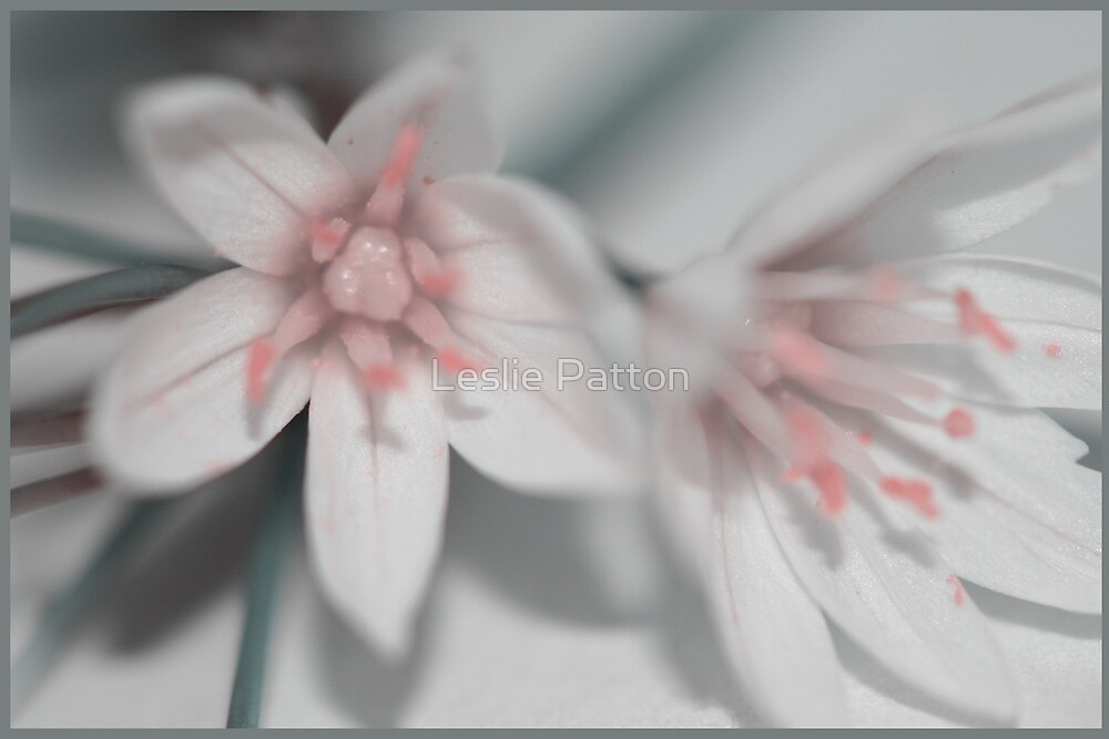 Flowers_9 by Leslie Patton